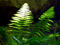 Bright Lighted Ferns