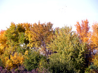 Fall Colors in Amana