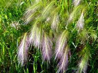 Wispy Feather Flowers